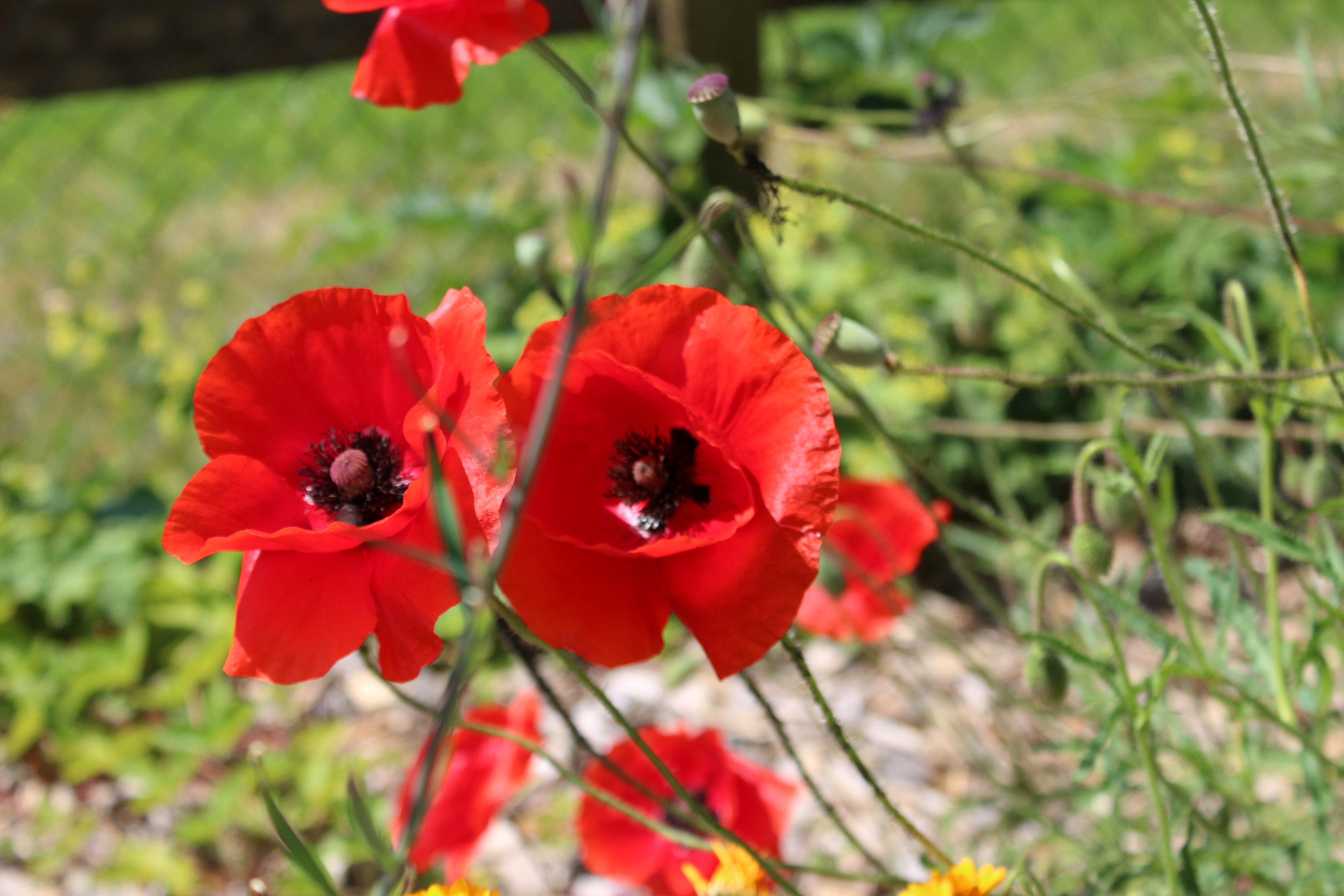 wunderschöner Blumengarten