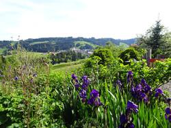 Wunderschöner Sommergarten