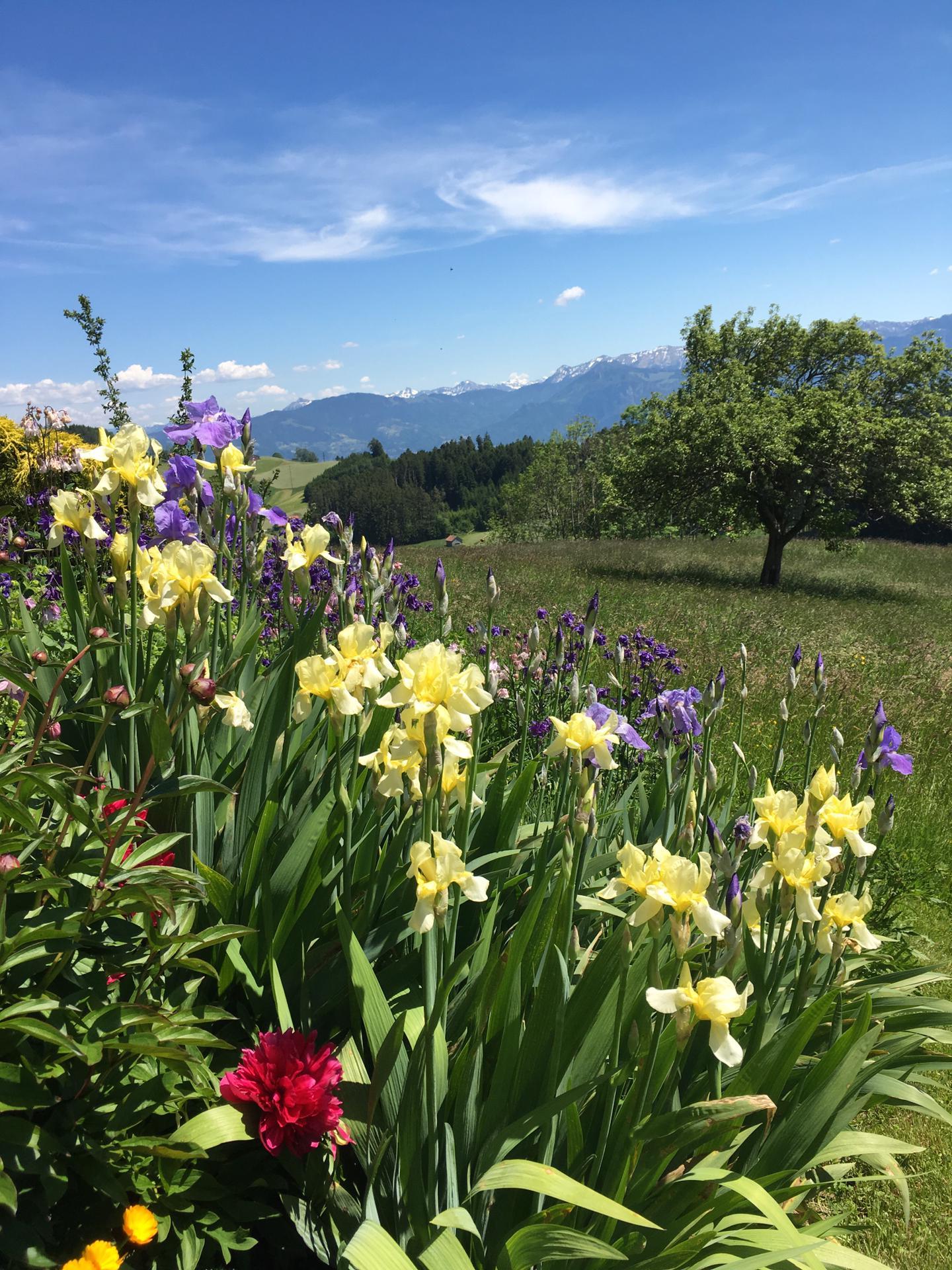 der wunderschöne Blumengarten
