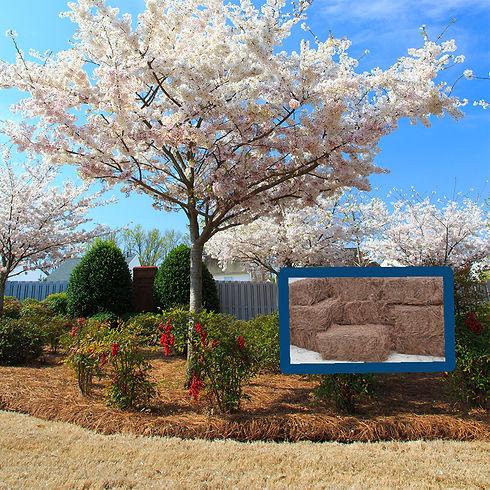 flowering dogwood brilliant tree flowers