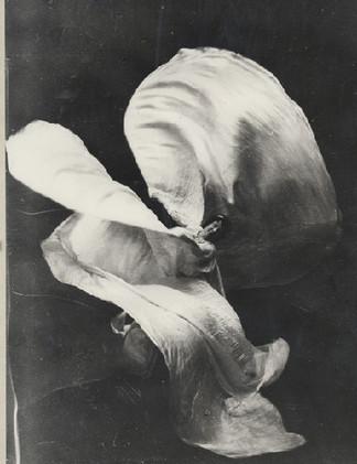 Frederick Glasier, Portrait of Loie Fuller, 1902