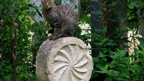 Los gatos de Freyja.