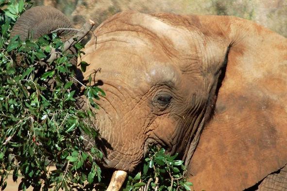 Africa_Elephant.jpg