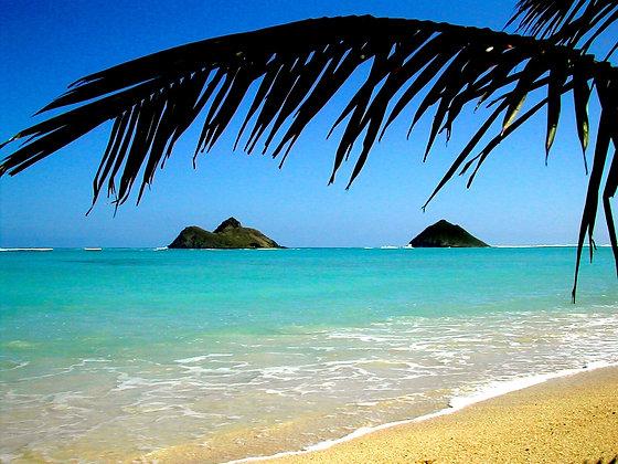 Beach Life 6