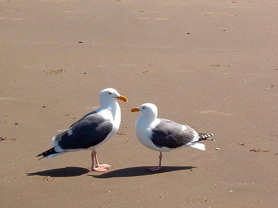 Beach Life 28
