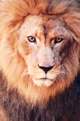 Wildlife 34