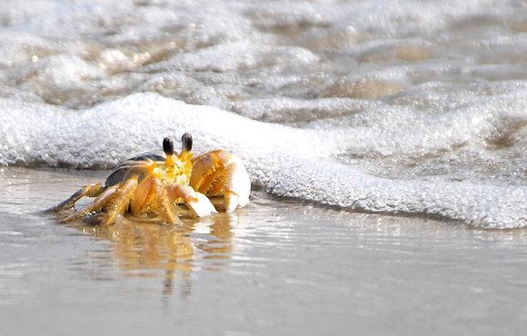 Beach Life 12