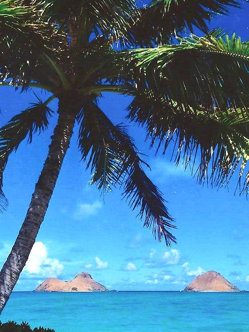 Beach Life 26