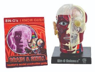 Bio Signs-Brain & Skull