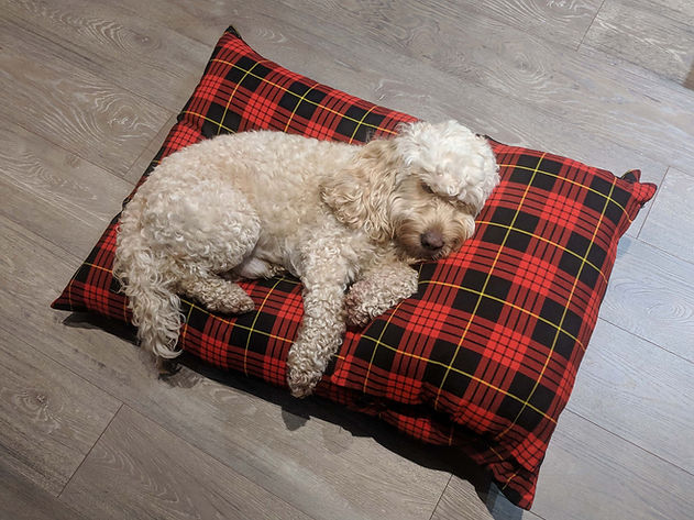 Cockapoo Dog Sleeping Red Tartan Dog Bed