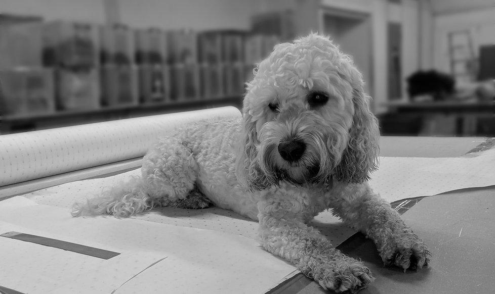 Designer Dog bed UK Cockapoo