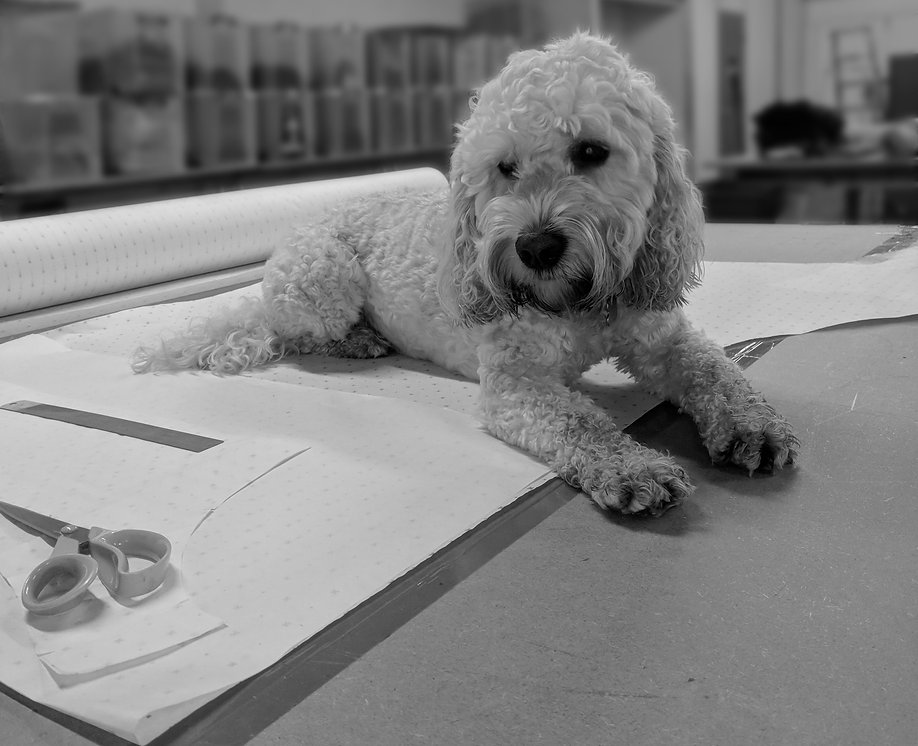 Designer Dog Cockapoo