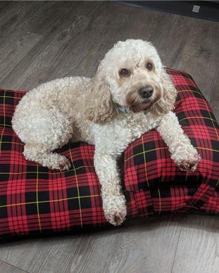 Red Tartan Dog bed with cockapoo.jpg