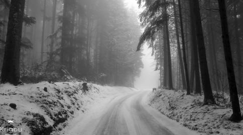 Forêt_en_hiver_avec_logo.jpg