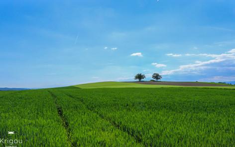 Deux arbres sur la colline avec traces d