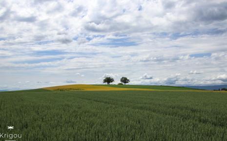Deux arbres sur la colline avec logo.jpg