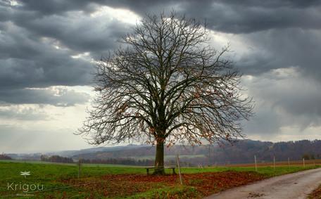 L'arbre_déplumé_Lumi_+_PS_with_logo.
