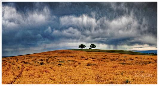 Arbres sous l'orage_DxO.jpg