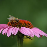 Une abeille au travail avec logo.jpg