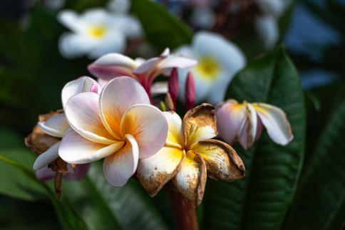 Art floral I.jpg