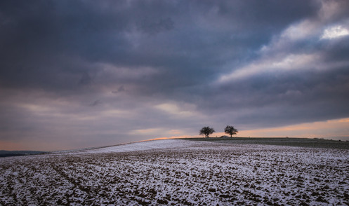 Colline aux deux arbres 2.jpg