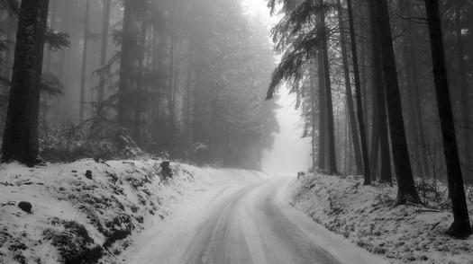 Forêt en hiver.jpg