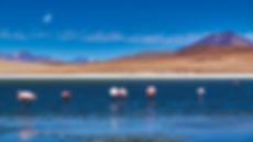 Flamingos 1b def.jpg