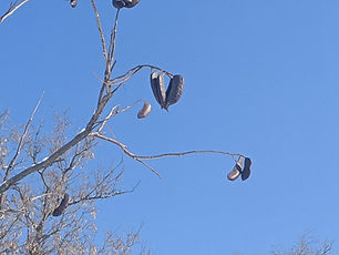 Hearts on tree.jpg