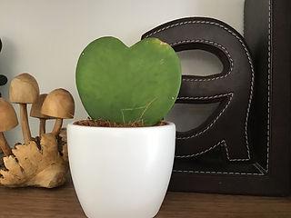 Cactus Heart.jpeg