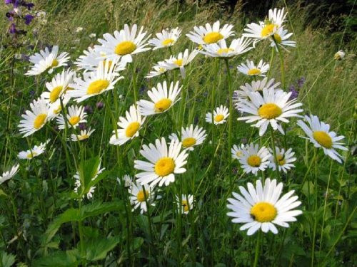 Ever Wondered What Flowers You Can Find on The Field? ... Read on ....