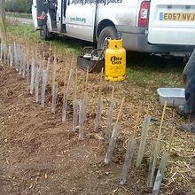 Hedge planting 2.JPG