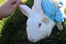 thelma-bunny.jpg