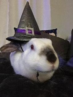 halloween-jane-witch.jpg