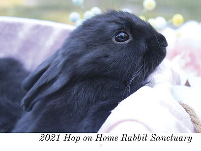 rabbit-rescue-calendar-cover.jpg
