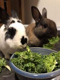 patron-saint-adopted-brown-bunny.JPG