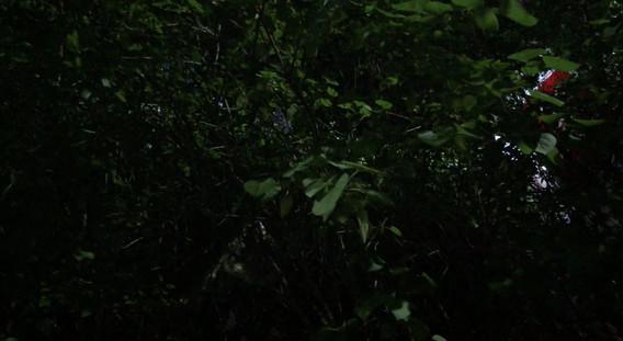 (Sub) 굉음지하 Roaring undergroung single channel video 00;04;45 2018