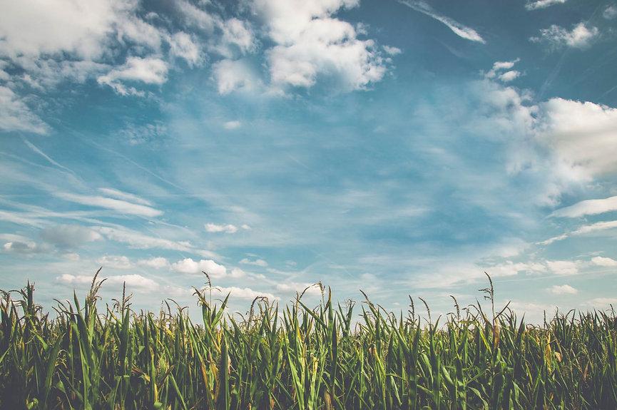 Corn Field_Less Clouds.jpg