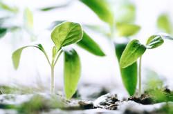 F-Seedlings2