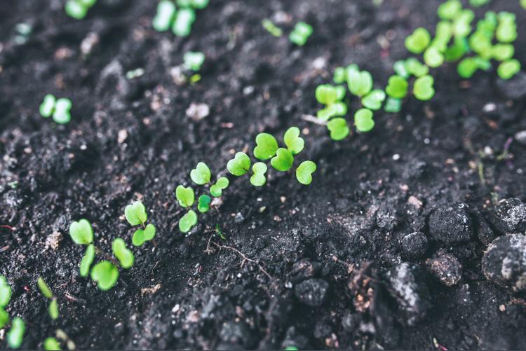 F-seedlings