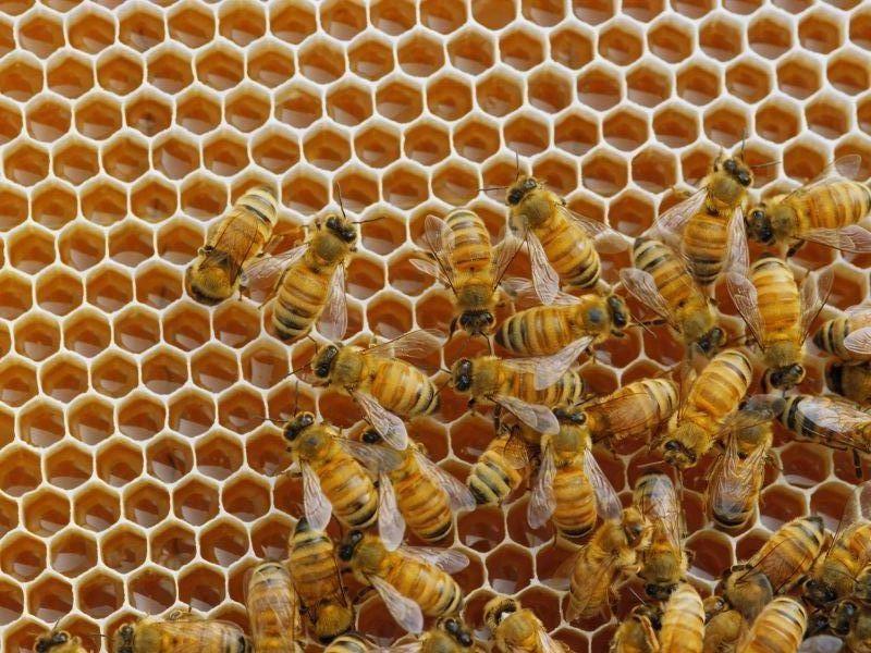 Panal de abejas el abuelo felix