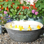 Ducks TN.jpg
