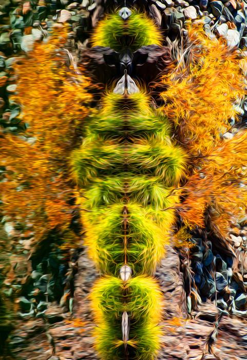 IMG_9465-crop-oil-sat.jpg
