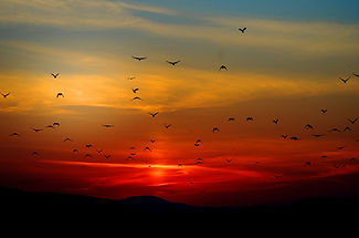 sunset-100367_960_720.jpg