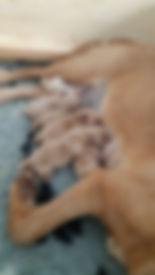 Daffi mit Welpen