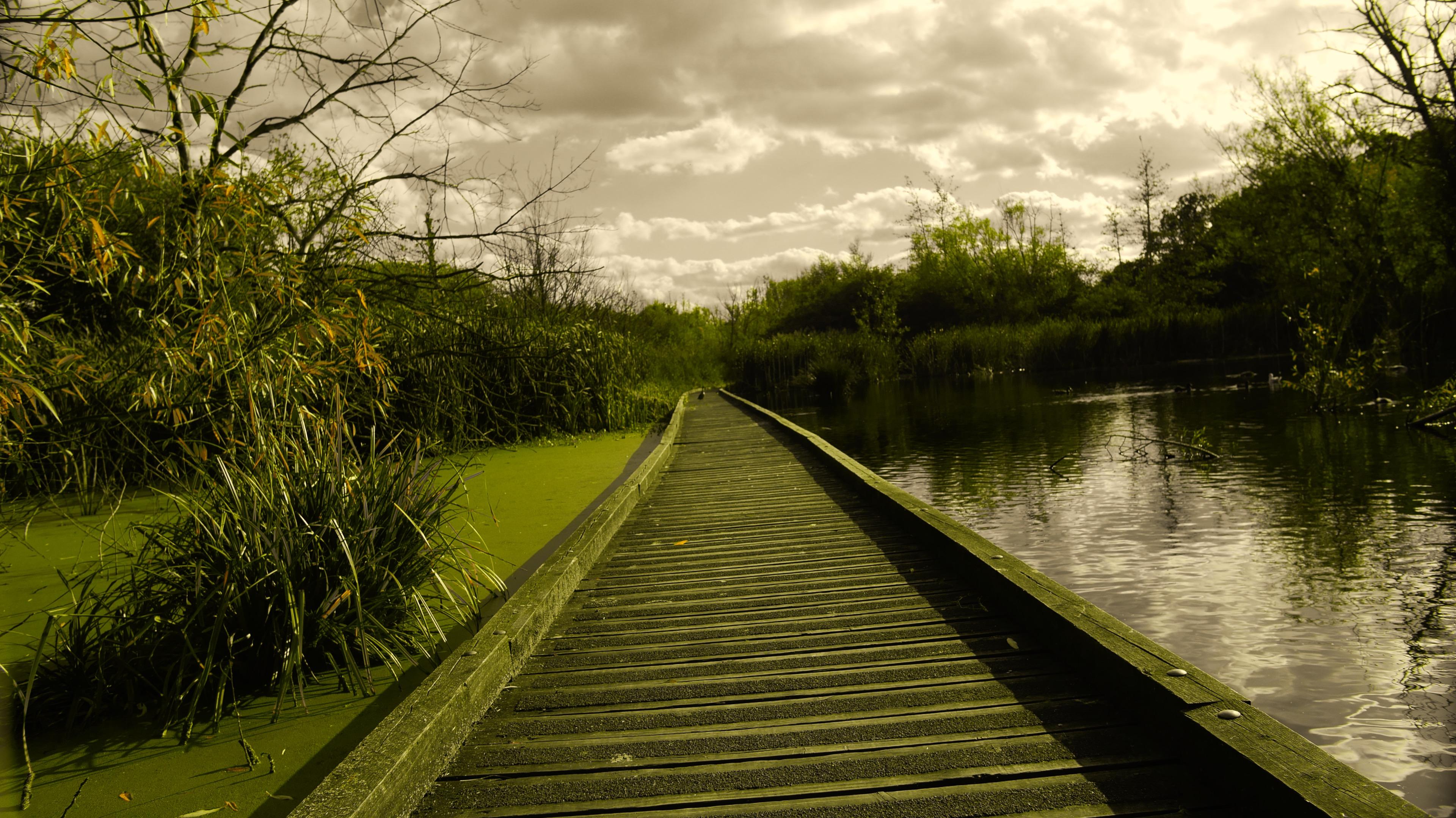 Green Moss Walkway