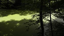 Green algae on water