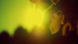 Leaf & Sun