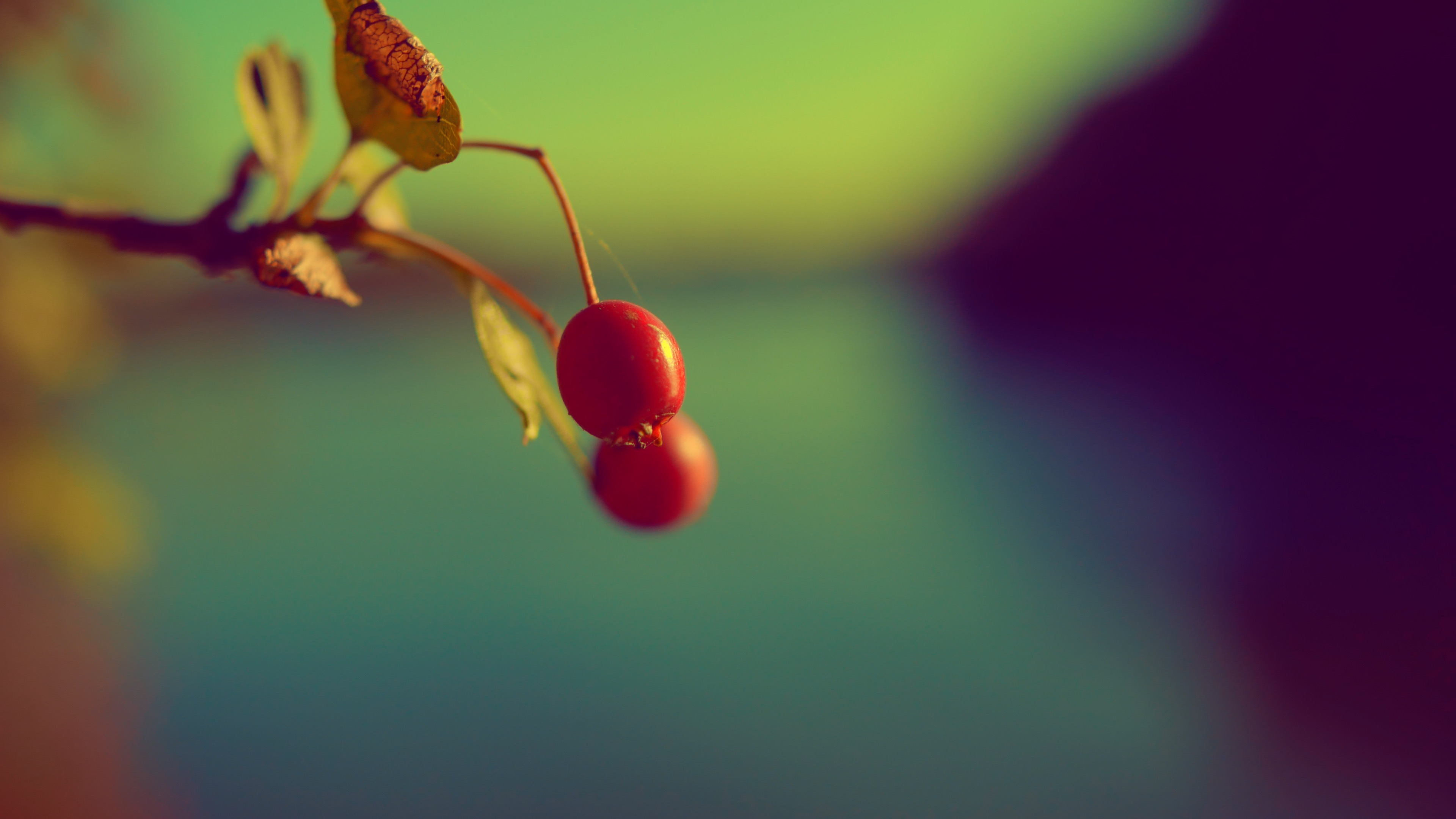 The 2 Cherries