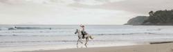 Sandy Bay Horses - Sandy Bay Beach