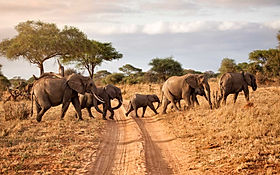 tarangire-national-park-elephants-day-tw